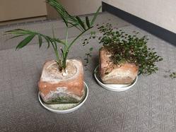 珪藻土の植木鉢 3
