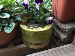 珪藻土の植木鉢 1