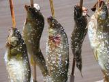 魚串4.jpg