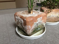 珪藻土の植木鉢 4