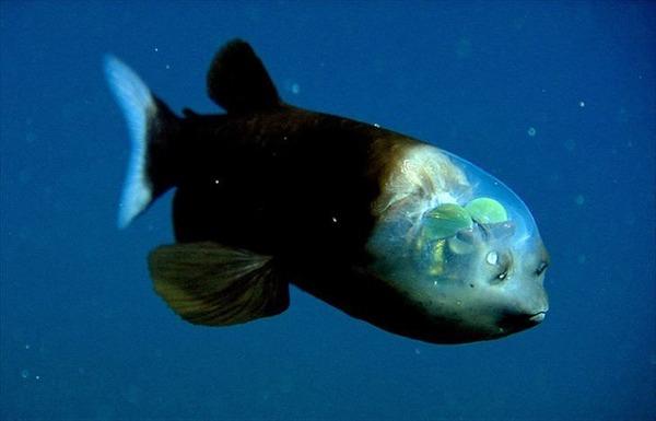 深海生物-1