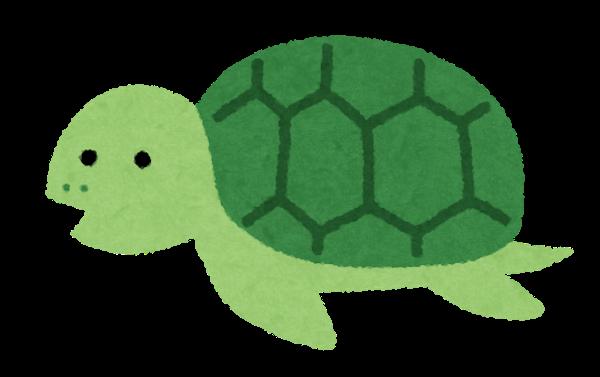 character_turtle_oya