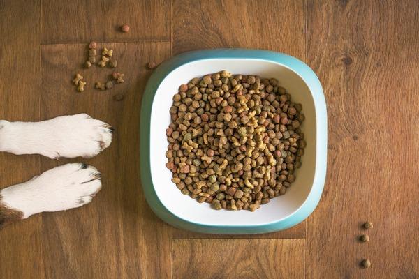 dog-food-5168940_1280