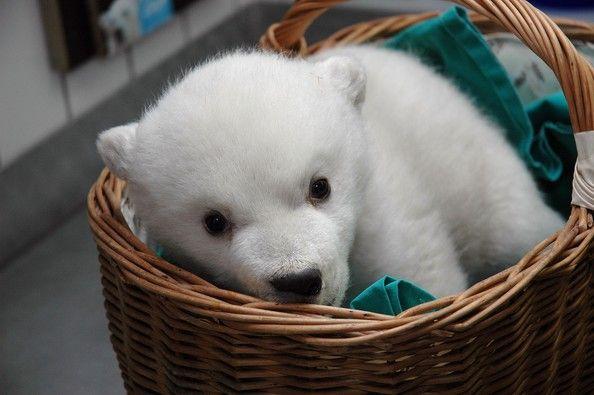 Polar+Bear+Cub+Stuttgart+Zoo+Q2_yJoCDHAWl