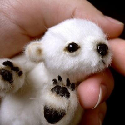 a real very small bear