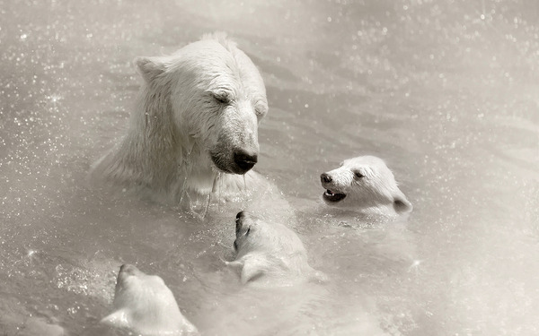 polar-bear-mother-cub-209984