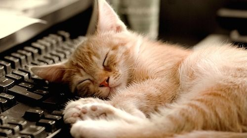 Sleeping_Cat-Cute_little_kitty_cat_living_wallpaper_1366x768