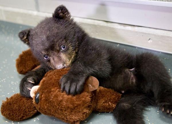 bear-cub-toy_2223075k