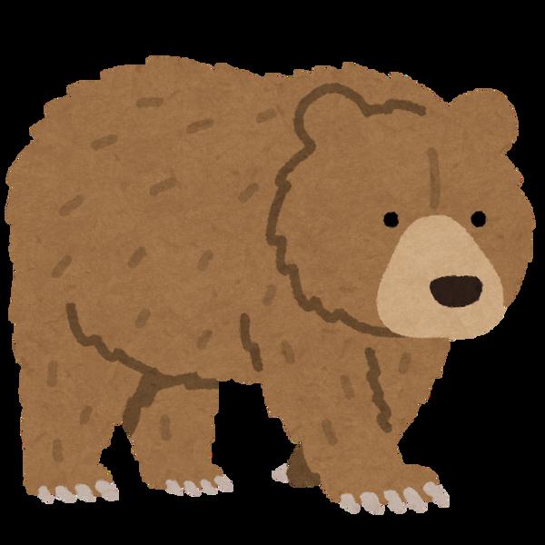 animal_bear_higuma