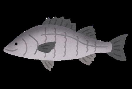 シーバス釣りで一番釣れるルアーってなに?ちなみにワームは無しで、フグがたくさんいるから