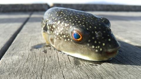 堤防釣りに行ったら初心者らしいカップルが「この魚食べれますか?」って聞いてきたのが