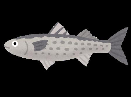 fish_bora