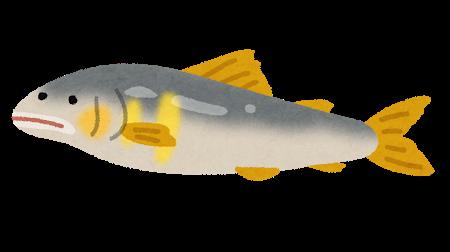 fish_ayu