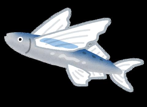 fish_tobiuo2