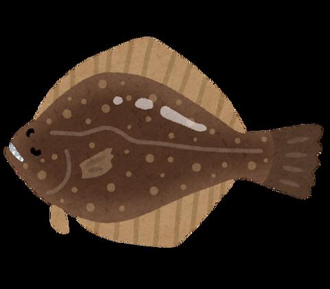 fish_sakana_hirame