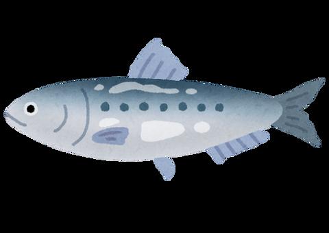 fish_sakana_iwashi