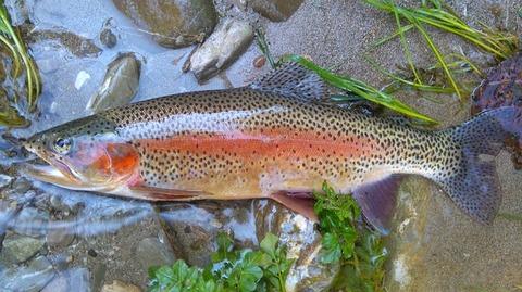 fish-1927122_640