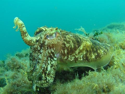 squid-225422_640
