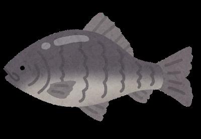 fish_funa