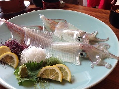 squid-262755_640