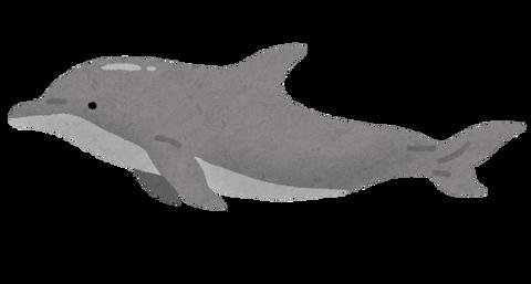 dolphin_bandouiruka