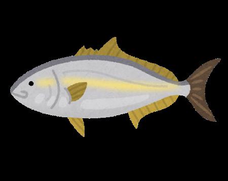 fish_buri