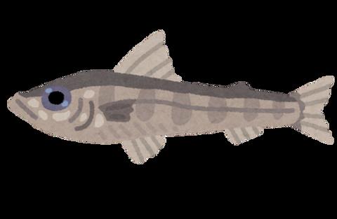 fish_mehikari