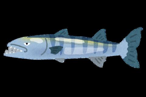 fish_barracuda_barakuda