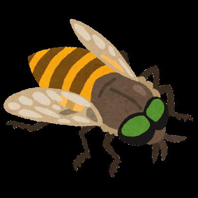 bug_abu