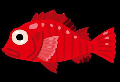 fish_kinki