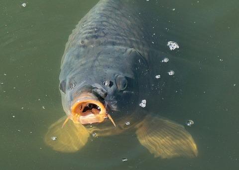 fish-1755473_640