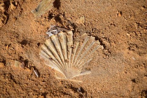 shell-1756638_640