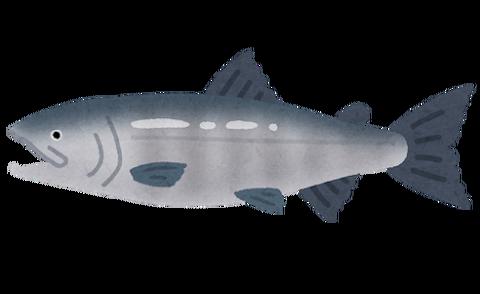 fish_sakana_sake