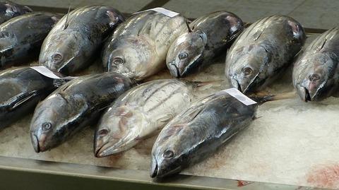 fish-market-244415_640