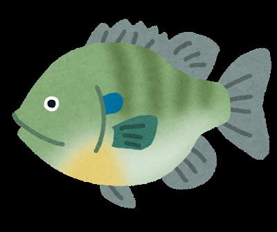 fish_bluegill2