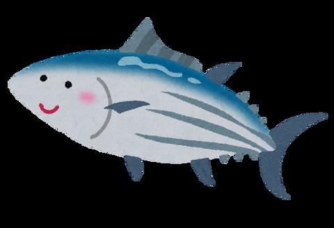 fish_katsuo