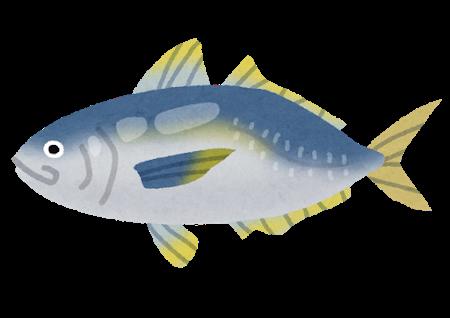 fish_aji2