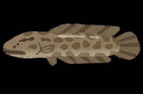 fish_raigyo2