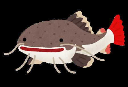 fish_redtail_catfish