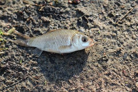 fish-1466464_640