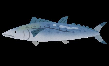 fish_sawara2