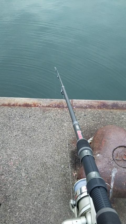 【画像】(´・ω・`)海釣りにきたよ~