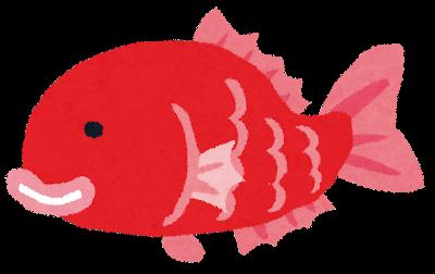 """ワイ北陸民、""""鯛""""が人気のない魚だと知って驚愕"""