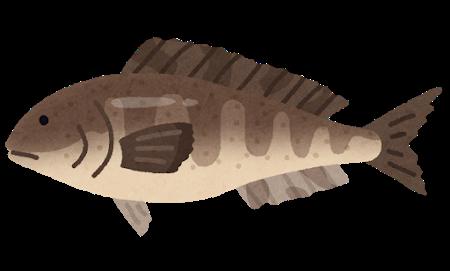 fish_hokke