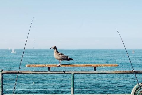 bird-925744_640