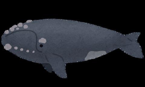 whale_03_semikujira