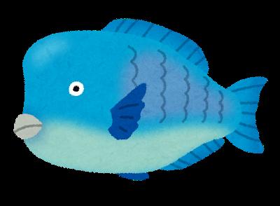 fish_aobudai