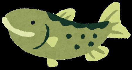 鮭が白身魚って知らない奴多いよなwwwwwwwwwwwww