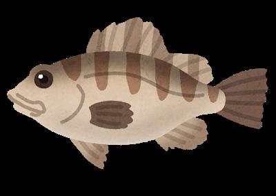 fish_mebaru