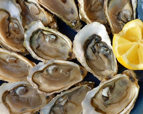 oysters-1958668_640